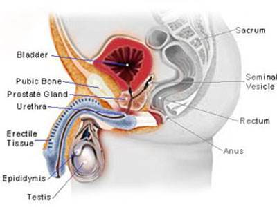 男性生殖器畸形有哪些表现?